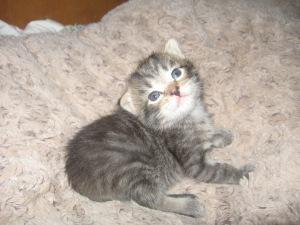 kittens 6
