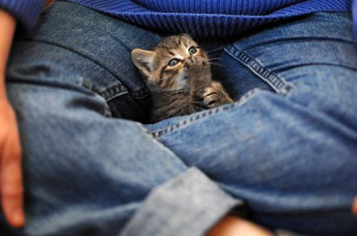 crotch kitten