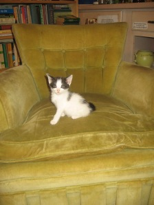 Young Owen tests a comfy chair