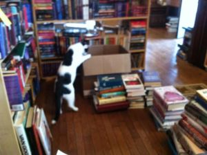 Owen helps with books