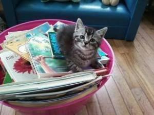 reading kitten