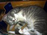 Winston sleeping
