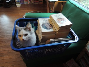 ..getting purrrsonally involved in inventory management....