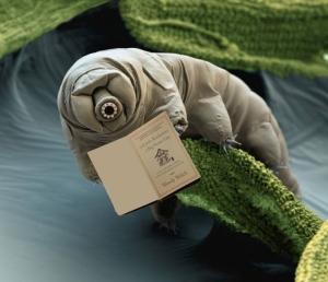 tardigradebook
