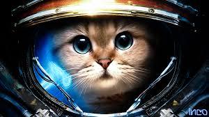 sf cat