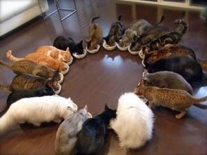 cat-feeding-circle