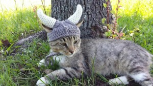 meme viking cats