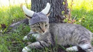 meme viking cats