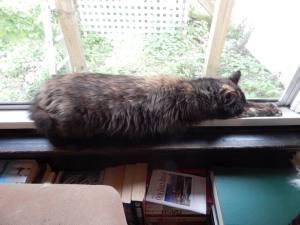 jessie resting