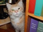 winston salem kitty 002