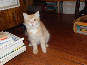 winston salem kitty 021