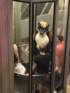 elevator furry